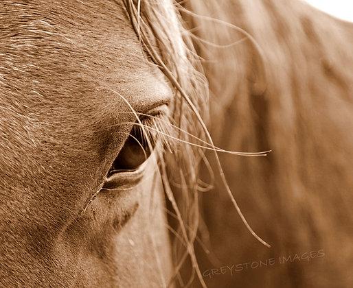 A Kind Eye (photo)