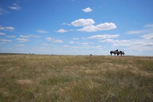 Prairie Sampler