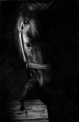 """""""In the Shadows"""""""