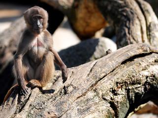 Calming the Monkey Mind
