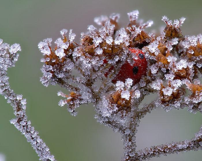 Matthew Nunn Ladybird1.jpg