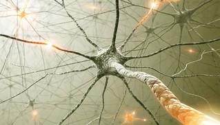 Nos pensées et nos émotions modifient notre cerveau et notre corps.