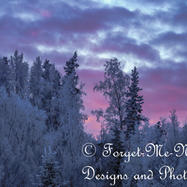 Frosted Trees against the Painted Sky