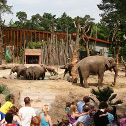 dierenpark-amersfoort-omgeving