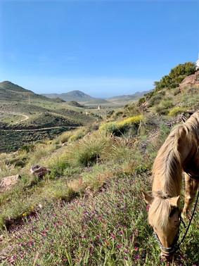 Parc National de Cabo de Gatas-Andalousie-Espagne