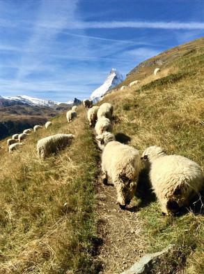 Mont Cervin-Zermatt-Suisse