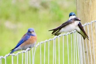 Blue%20Bird%20keeping%20an%20eye%20on%20