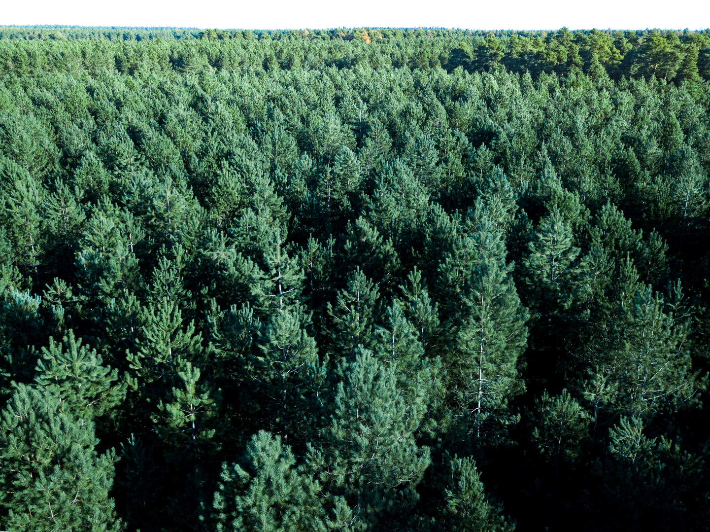 The CNMI is looking for 2 timber researchers to join the team!