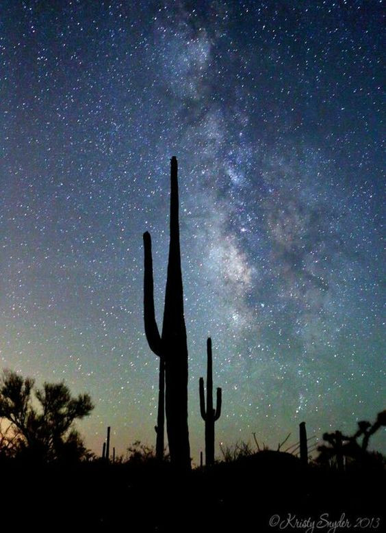 Starry sky against cactus by Kristy Snyder Photography