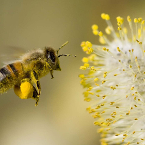 Treat Allergies + Hay Fever Naturally