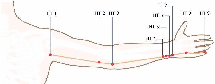 HT1 through HT7 acupuncture points, arm