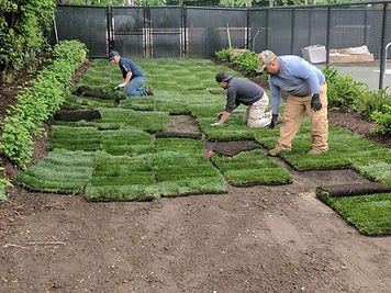 Installation of Turfgrass Sod in NY