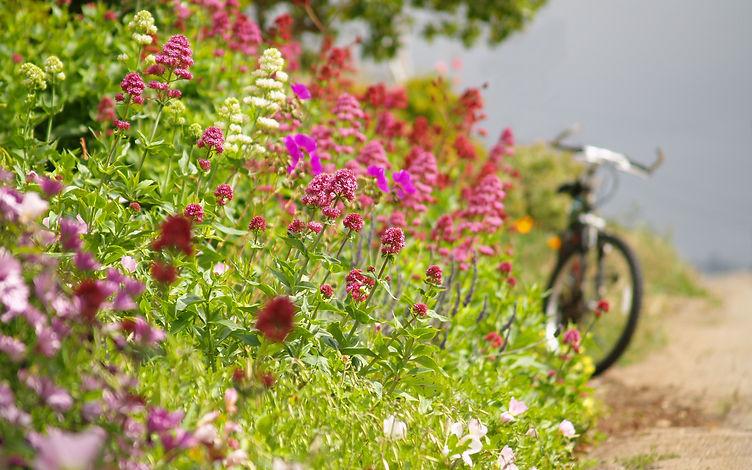 spring-bicycle-tune-up.jpg