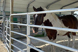 CPRF Supports Agricultural Police and Horse Sanctuary
