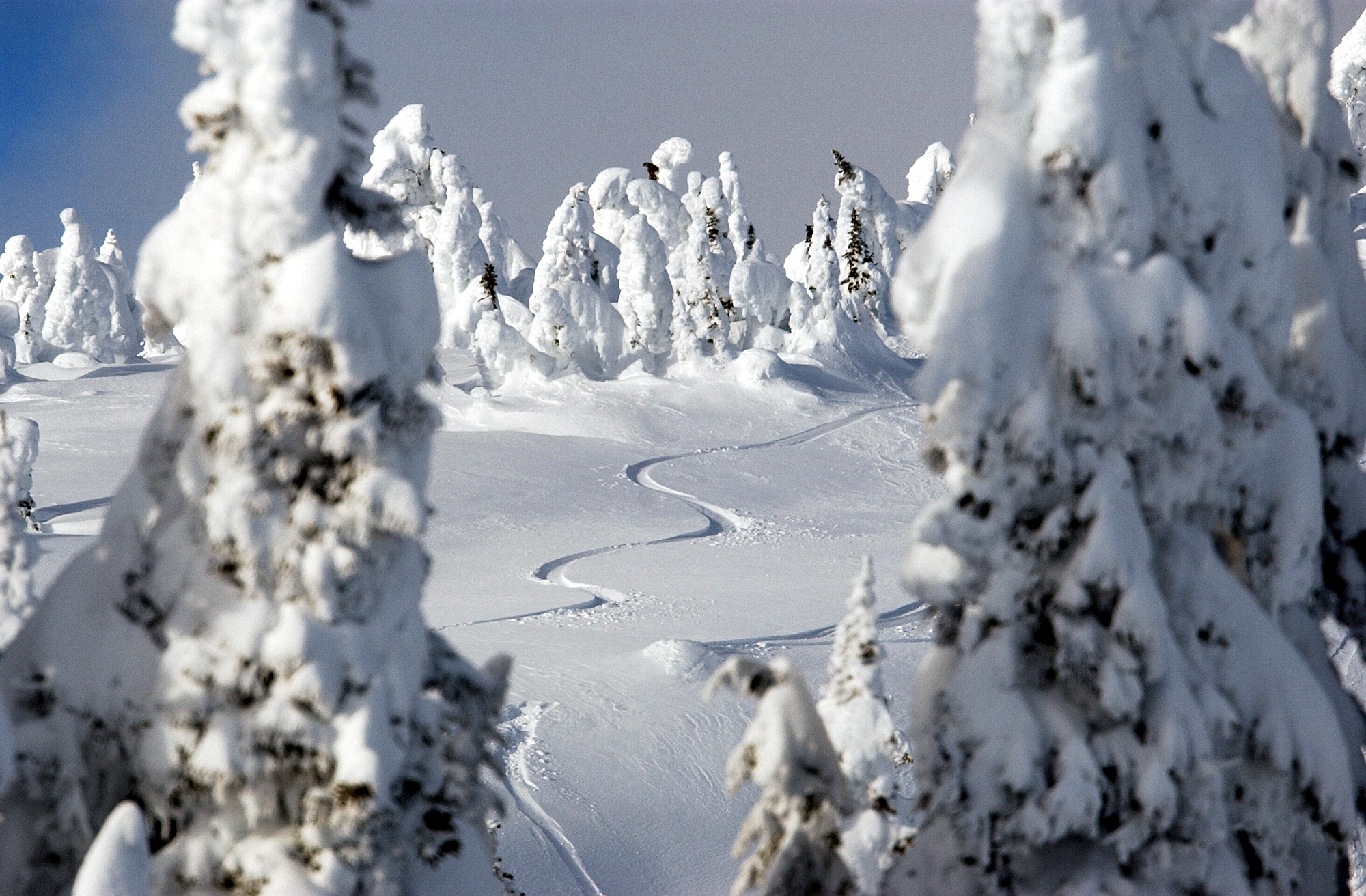 Fresh tracks on a Big White powder day