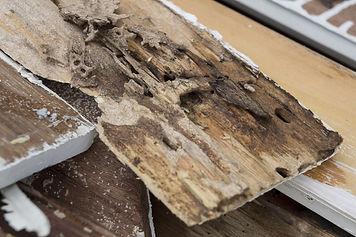 Pollards Pest Control Termites