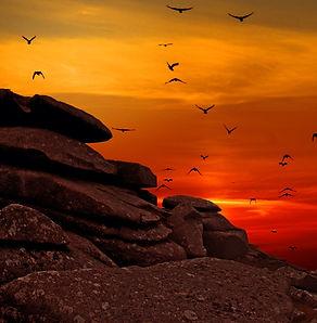 birds-dawn-dusk-164162.jpg