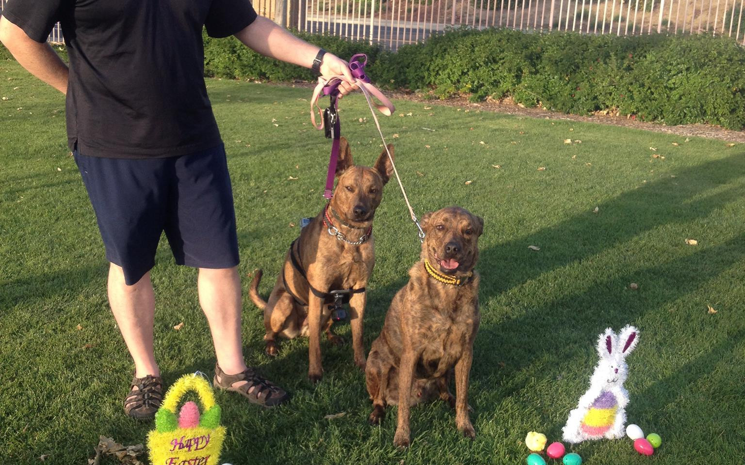 Easter with Anubis and Jarvis. Oh and Todd too. Todd is our other trainer.