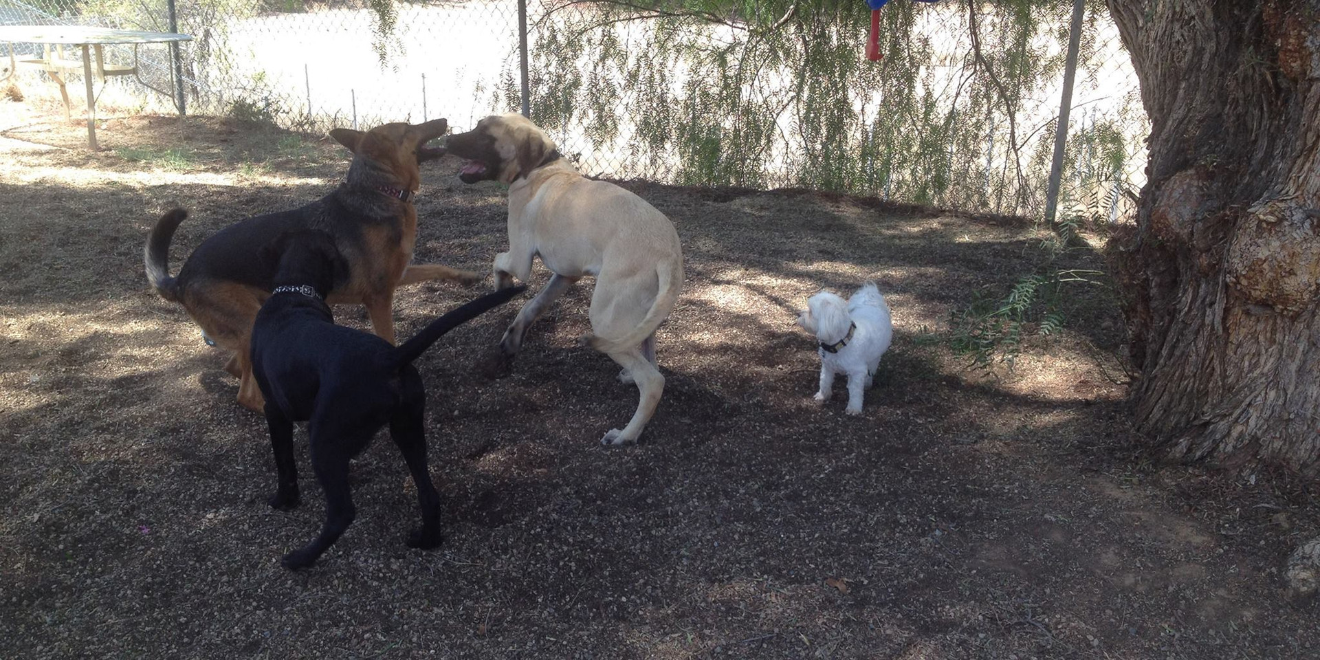 Doggie Socialization