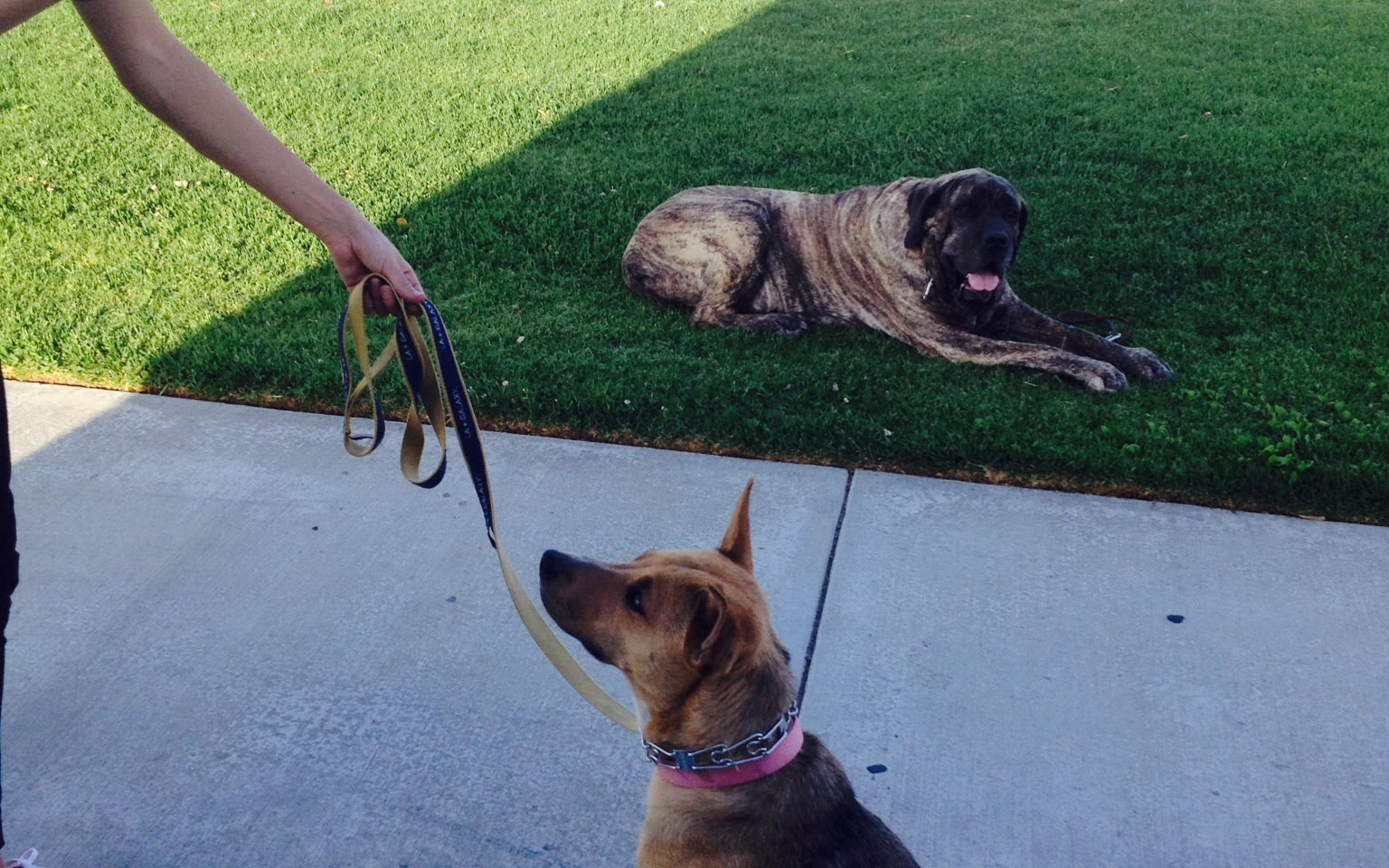 Mieka is dog selective and this was a focus drill. Gertrude was my demo dog back in the day. 2015