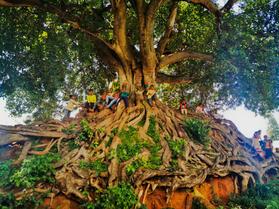 Avatar-like tree on RN34