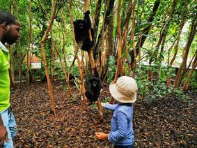 Ray feeding the Indri lemur