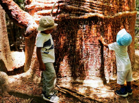 Ray and Nic by a huge baobab trunk