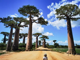 Ray running toward the Avenue of Baobabs