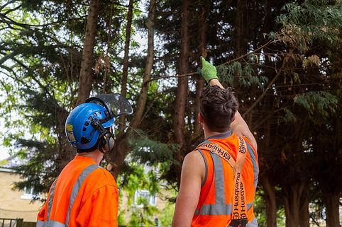 Tree Insurance Claims