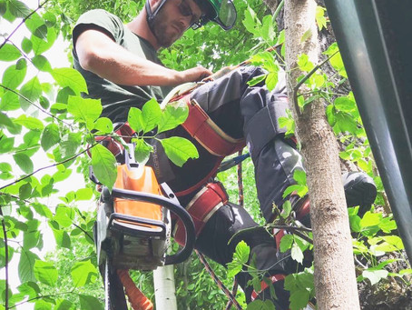 What to look for in a Tree Pruning or Arborist in Calgary