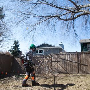 Tree Services Calgary - 05 - Evergreen L