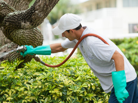 How often should I water and fertilize my trees, shrubs and plants?