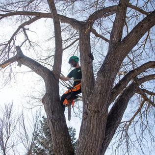 Tree Services Calgary - 38 - Evergreen L