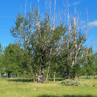 Acreage Tree Clearing - Before - 01 - Ev