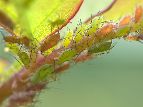Tree Insect and Pest Removal