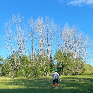 Acreage Tree Clearing - Before - 02 - Ev