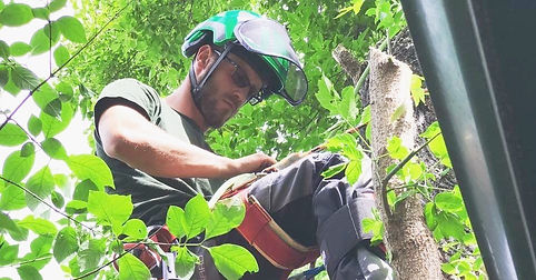 Tree Pruning & Shaping