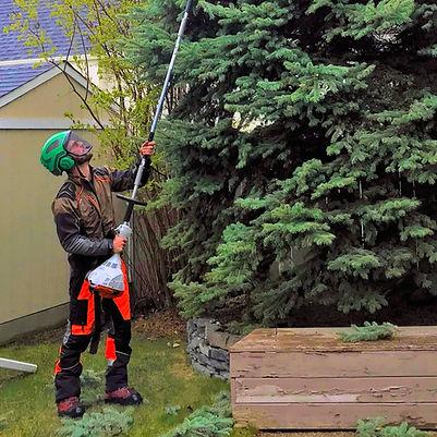 ISA Certified Tree Pruning - Calgary - E