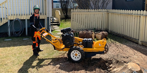 Tree%20Removal%20Stump%20Grinding%20Calg