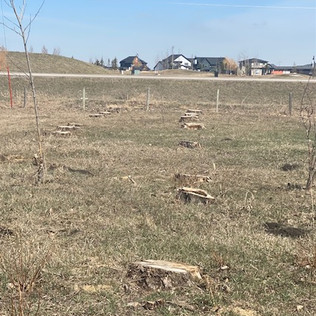 Acreage Tree Clearing - After - 02 - Eve
