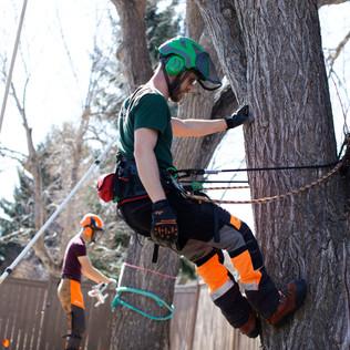 Tree Services Calgary - 28 - Evergreen L