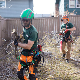 Tree Services Calgary - 52 - Evergreen L