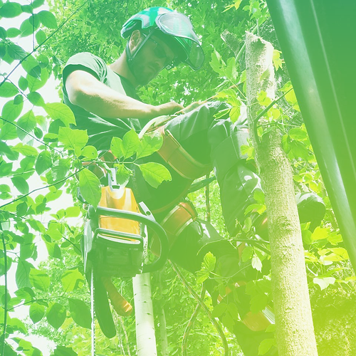 Tree Pruning Services Calgary - Evergree
