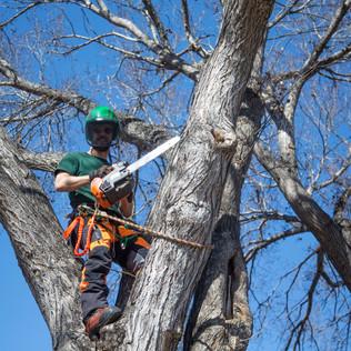 Tree Services Calgary - 36 - Evergreen L