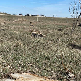Acreage Tree Clearing - After - 03 - Eve