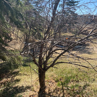 Acreage Tree Clearing - After - 05 - Eve