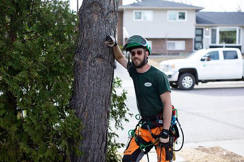 Tree Disease Treatment