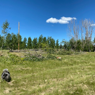 Acreage Tree Clearing - Before - 03 - Ev