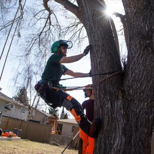 Tree Services Calgary - 31 - Evergreen L