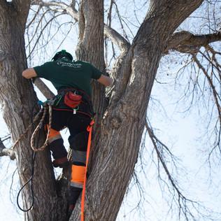 Tree Services Calgary - 33 - Evergreen L